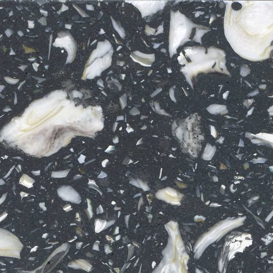 Black Oyster- TB62